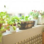 庭のリフォームにかかる費用